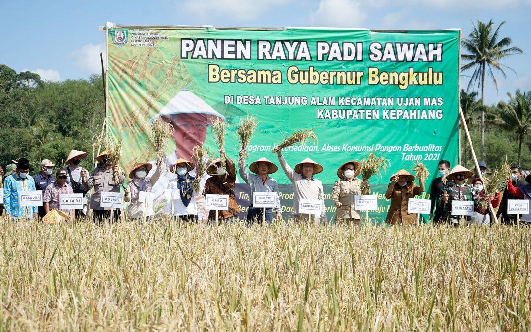 Gubernur Bengkulu dan Bupati Kepahiang Panen Padi Di Desa Tanjung Alam